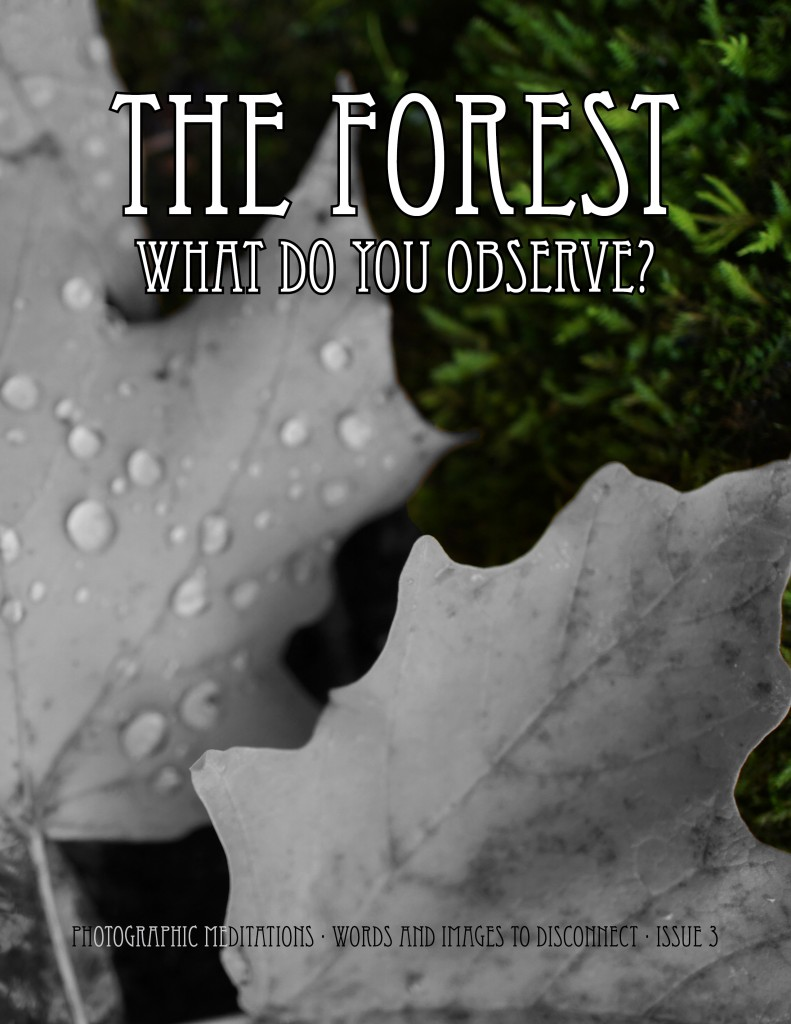 The Forest - What Do You Observe - Photographic Meditations Vol 3 - Pink Lake Canada
