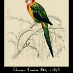 Edouard Travies Animal Illustrations