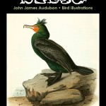 John James Audubon Bird Illustrations