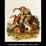John James Audubon Chipmunk Illustration