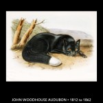 John James Aububon Fox Illustration