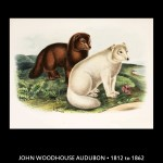 John James Aububon Dog Illustration