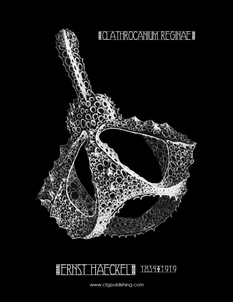 Clathrocanium reginae Radiolarian by Ernst Haekel