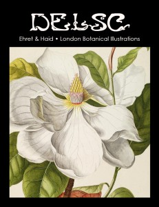 ehret-botanical-illustrations
