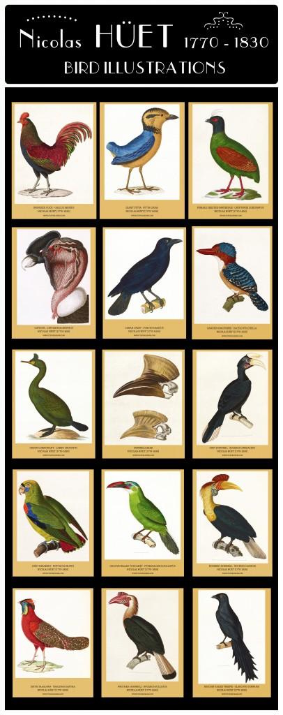 Nicolas Huet Bird Illustrations Composite