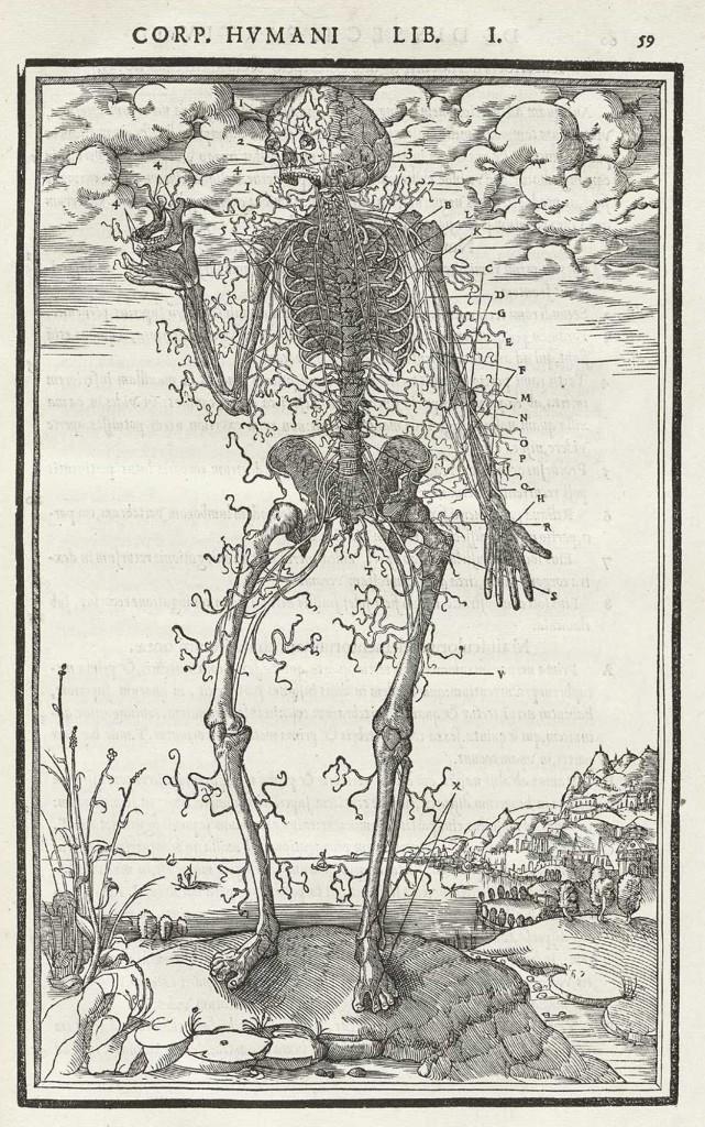 Skeletal Images by Etienne de La Rivière circa 1545 from De dissectione partium corporis humani by Charles Estienne