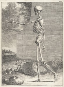 Skeleton Image by Jan Wandelaar 1690-1759 from Bernhard Siegfried Albinus 1697-1770 Tabulae sceleti circa 1749
