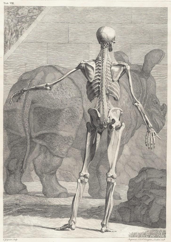 Skeleton Images by Jan Wandelaar circa 1749 -