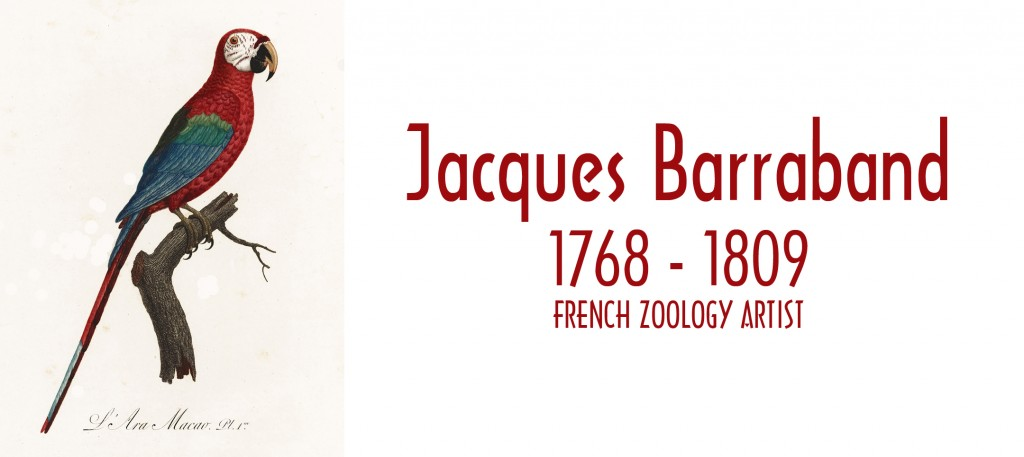 Jacques Barraband Born 1768 and Died 1809 Zoology Artist