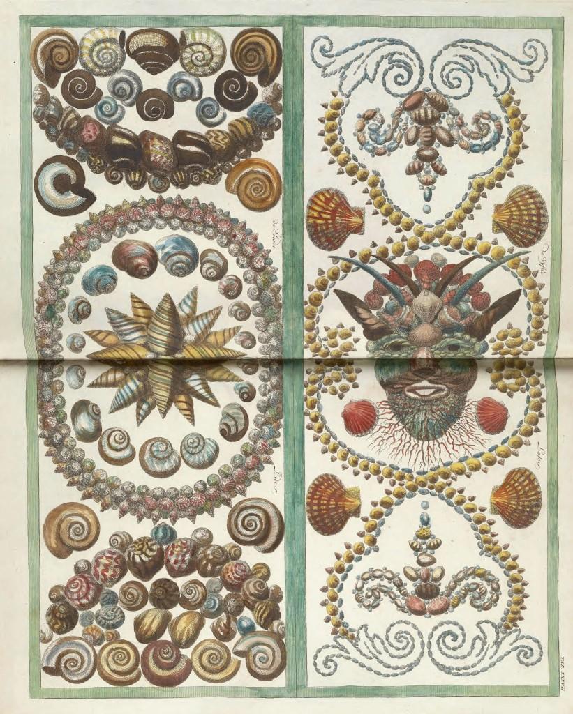Shell Design Antique Pint From Locupletissimi Rerum Naturalium By Albert Seba Circa 1734