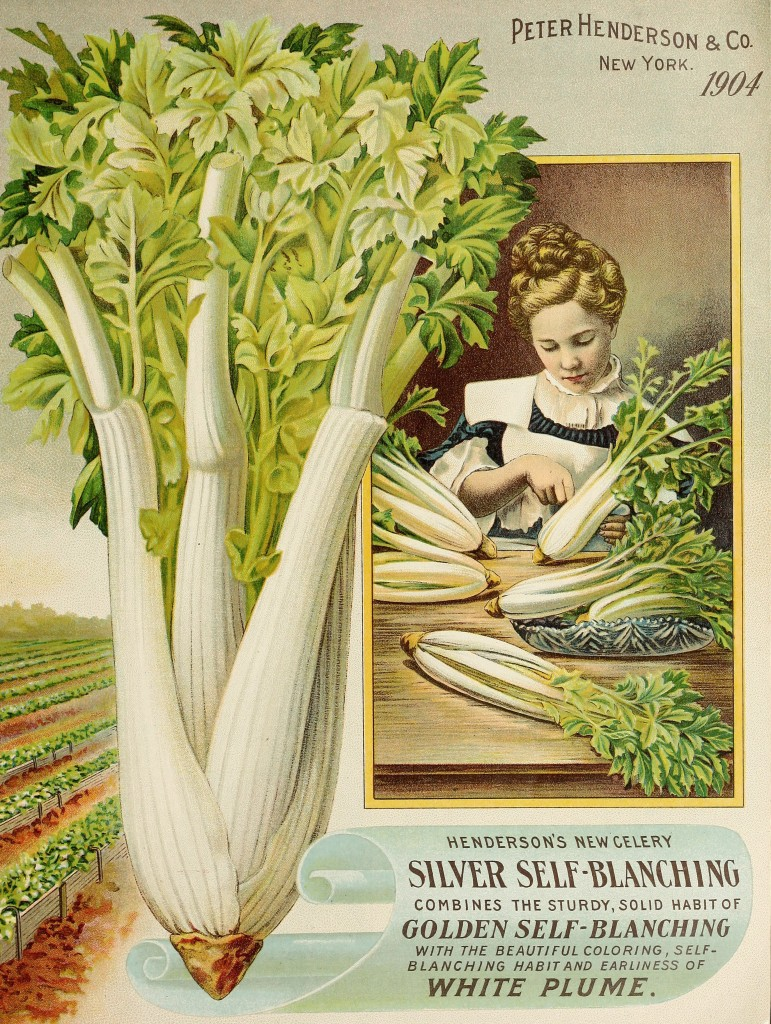 Illustration of Woman and Silver Self-blanching Celery circa 1904 - Peter Henderson Co.