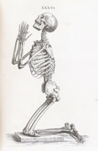 Skeleton Illustration from William Cheselde (1688-1752) Osteographia circa 1733