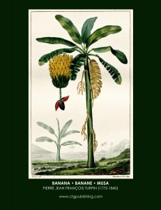 Banana Tree Botanical Print by Turpin