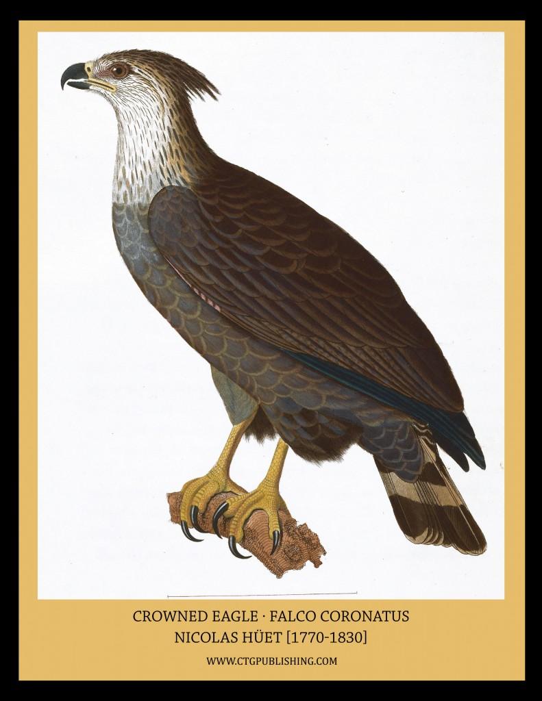 Crowned Eagle - Illustration by Nicolas Huet