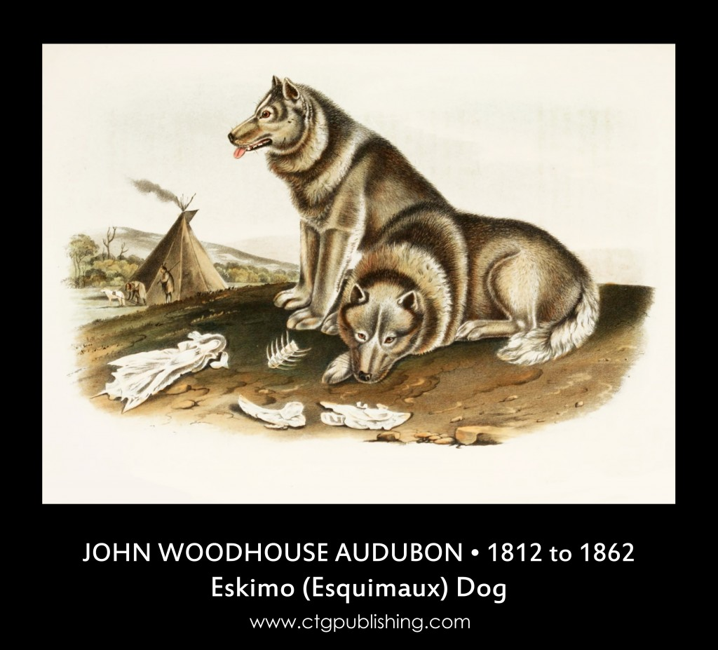 Eskimo Dog - Illustration by John Woodhouse Audubon