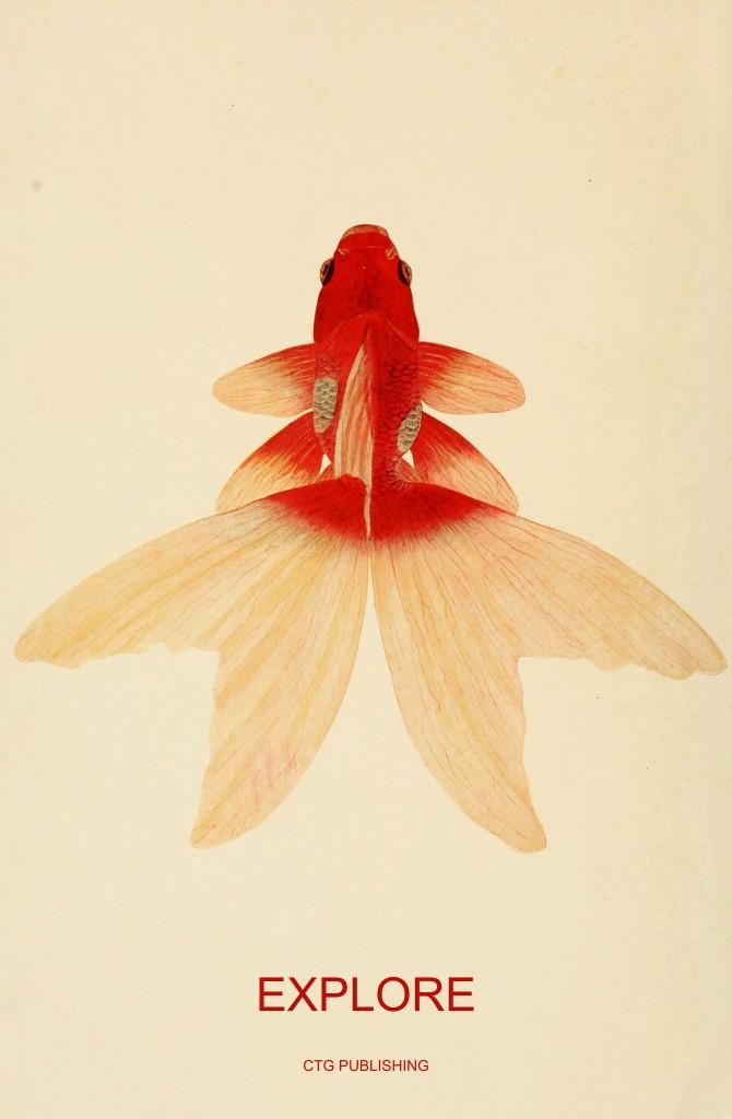 Goldfish Explore - CTG Publishing