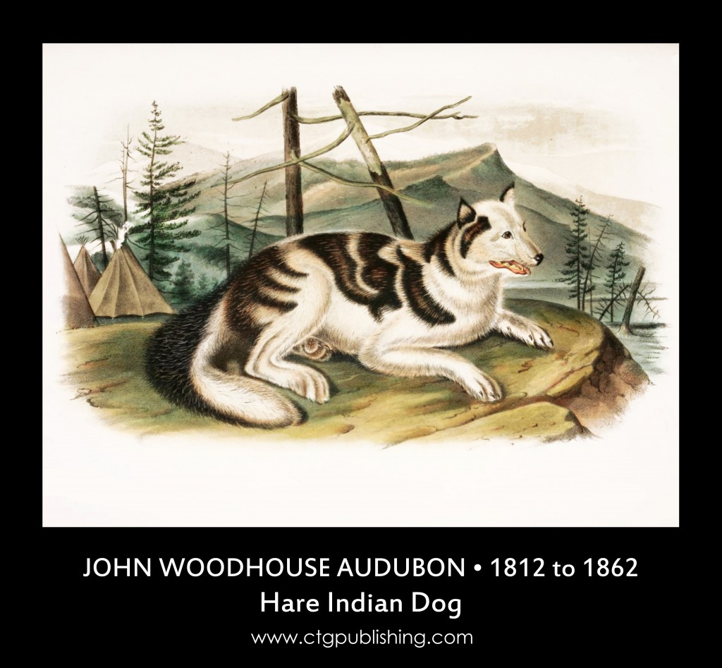 Hare Indian Dog - Illustration by John Woodhouse Audubon