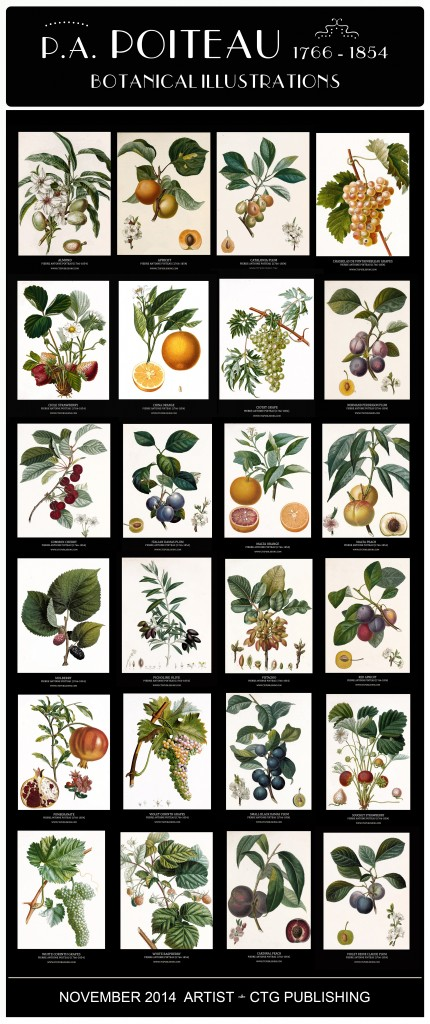Pierre Antoine Poiteau Botanical Illustrations - Artist of the Month November 2014