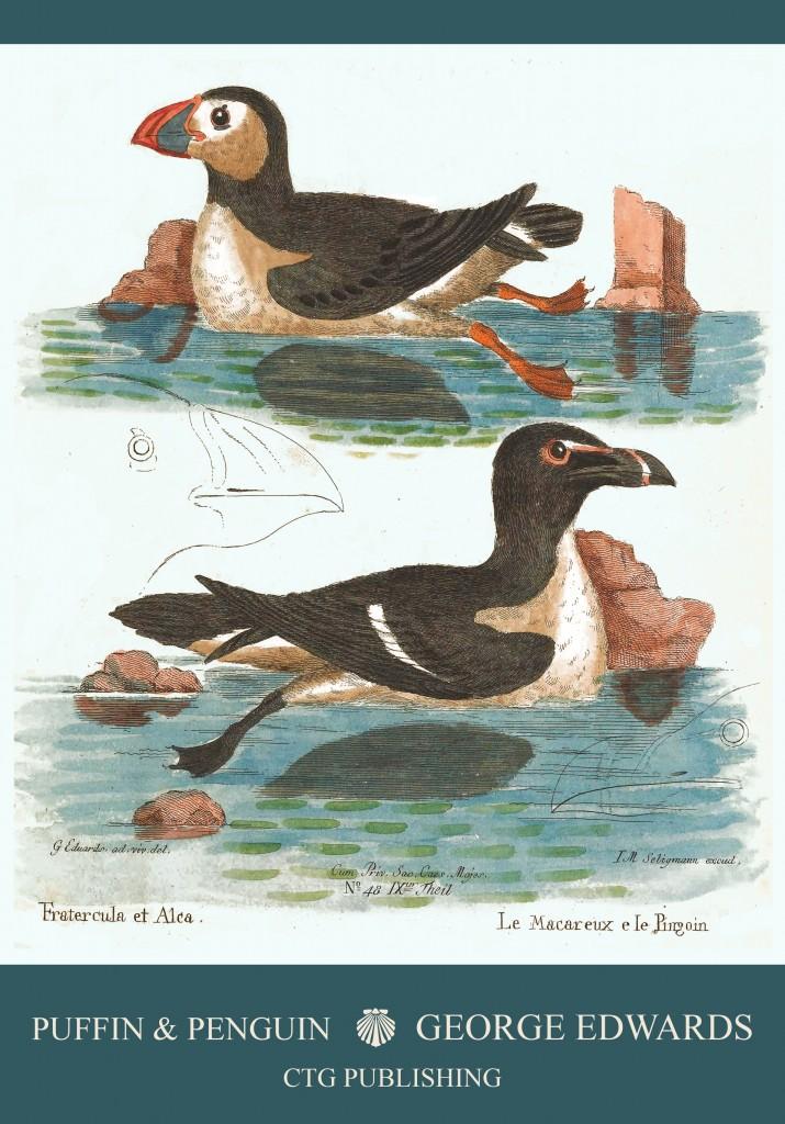 Frigatebird Illustration by George Edwards