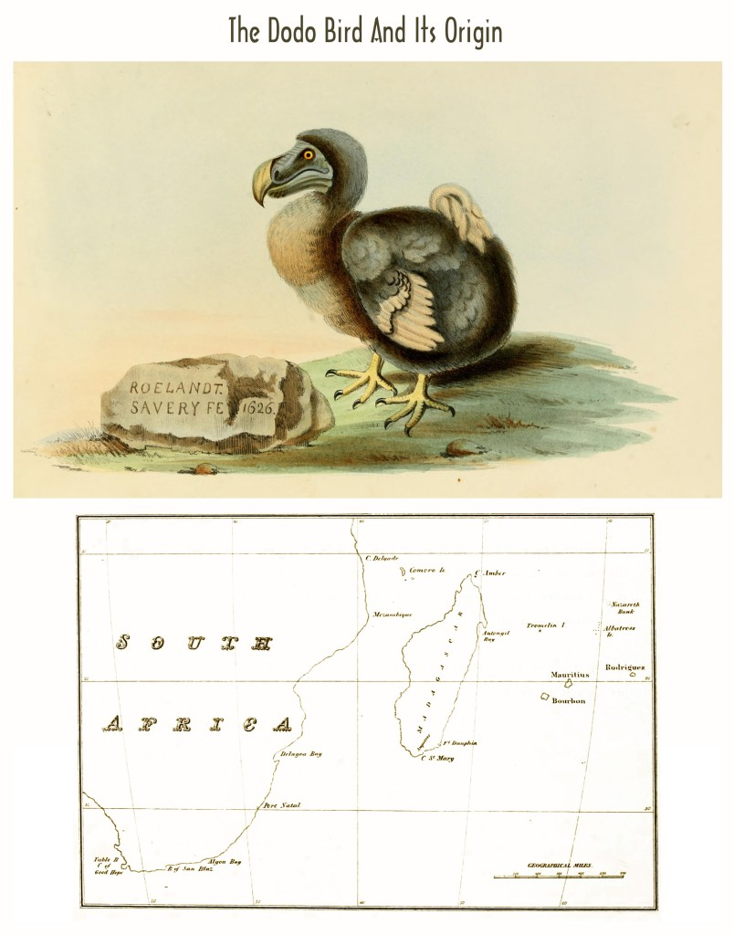 The Dodo Bird and  its Origin - Illustration and Map