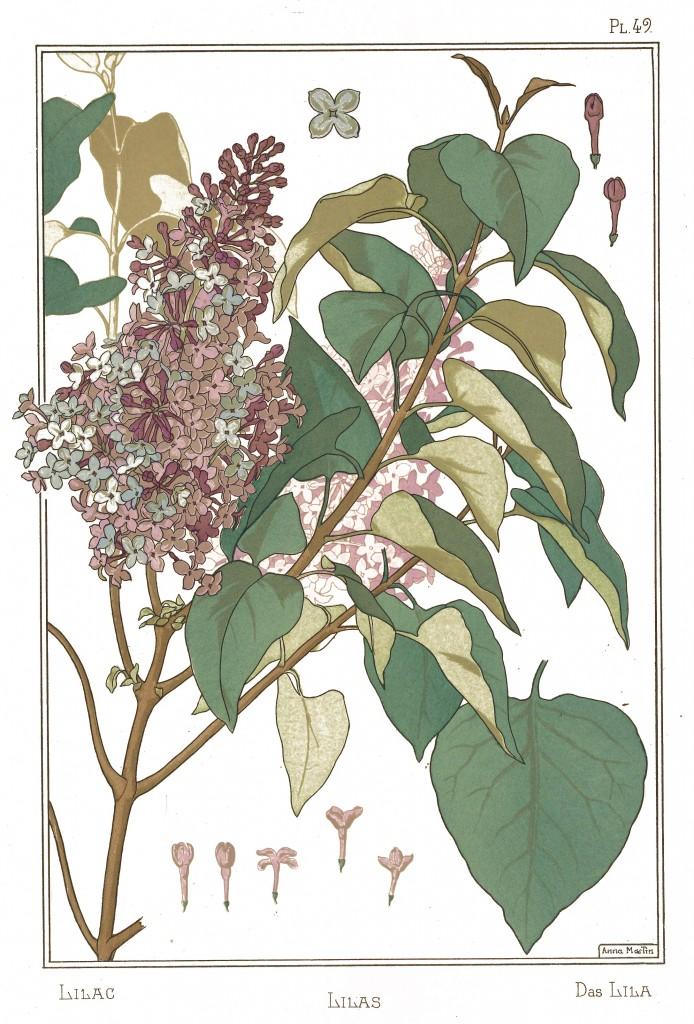 Anna Martin Art Nouveau Illustration: Lilac - Lilas - Lila