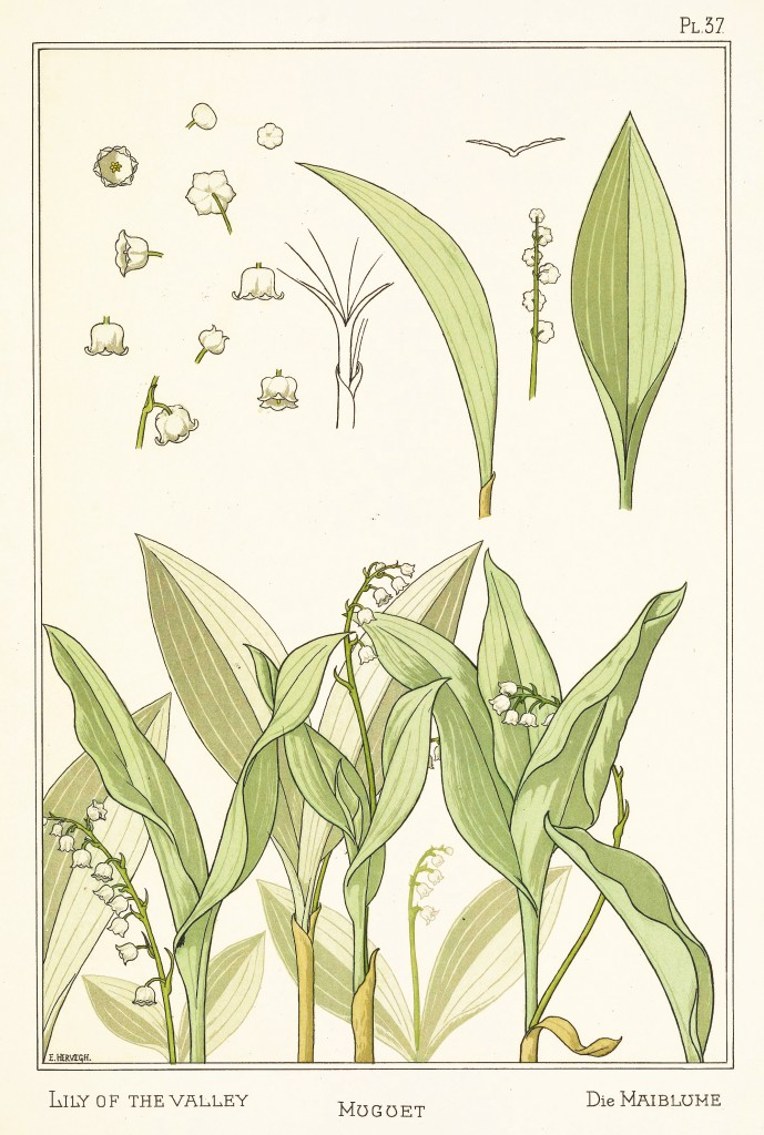 E Hervegh Art Nouveau Illustration: Lily Of The Valley - Muguet - Mailblume