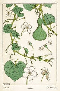 Maurice Pillard Verneuil Art Nouveau Illustration: Gourd - Courge - Kurbiss
