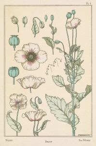 Maurice Pillard Verneuil Art Nouveau Illustration: Poppy - Pavot - Mohn