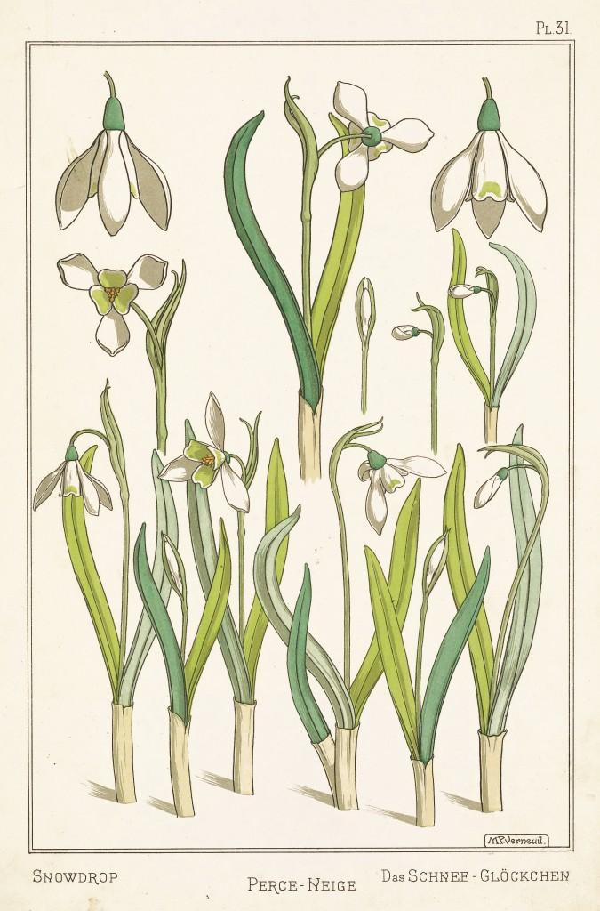 Maurice Pillard Verneuil Art Nouveau Illustration: Snowdrop - Perce Neige - Schnee Glockchen