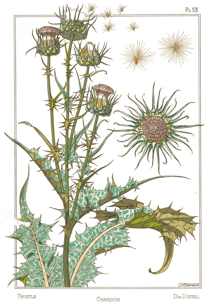 Maurice Pillard Verneuil Art Nouveau Illustration: Thistle - Chardon - Distel