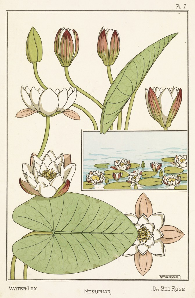 Maurice Pillard Verneuil Art Nouveau Illustration: Water Lily - Nenuphar - Seerose